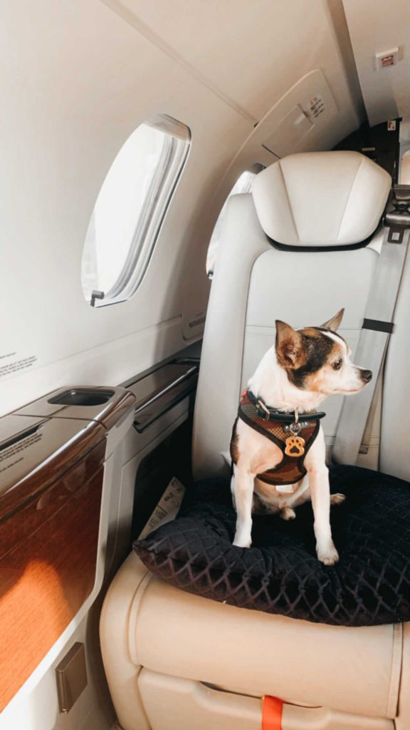 Pet on private jet