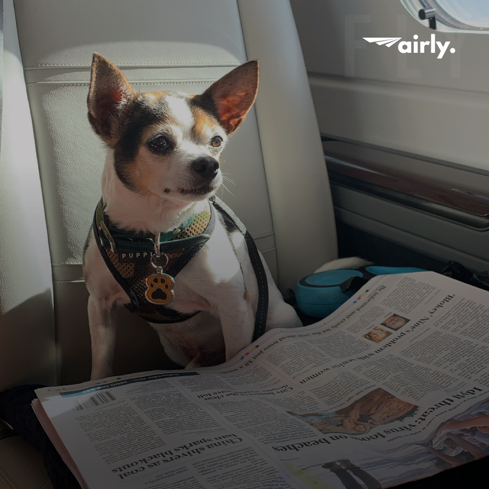 Pets on Private Jets